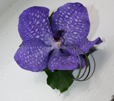 Vanda orchid groom buttonhole